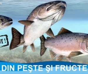 Peste 2300 de produse din peşte donate persoanelor defavorizate din Sectorul 6